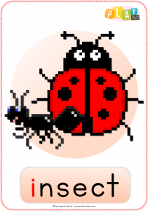 Flashcard I - Insect
